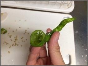 sisitou ししとう常備菜レシピ人気 1 位は辛くない料理・豆板醤を使い切るレシピ