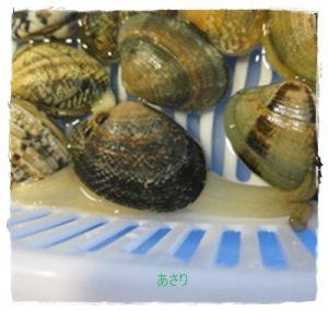 asari1-300x285 アサリの保存方法 潮干狩り後 砂抜きして冷蔵庫・冷凍の方法